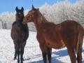 20160107 Zimowe konie