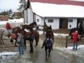 zawody konie 117